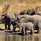 African Elephants. Photo by Morné Hamlyn (Umlani Bushcamp)