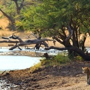 Leopard at a water hole... Photo by Morné Hamlyn (Umlani Bushcamp)