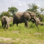Elephants on the main road. Photo by Morné Hamlyn (Umlani Bushcamp)