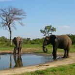Elephants at Umlani waterhole.Photo by Morné Hamlyn (Umlani Bushcamp)