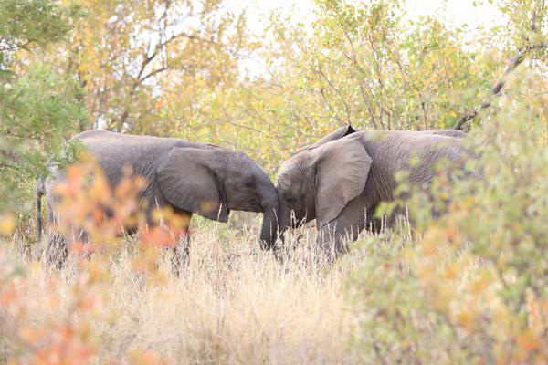 Young Elephant Affection